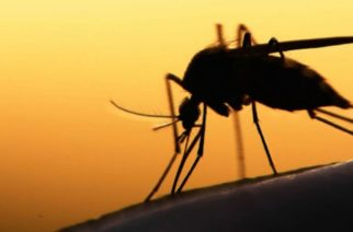 Alertan en México por virus mortal en picadura de mosco negro