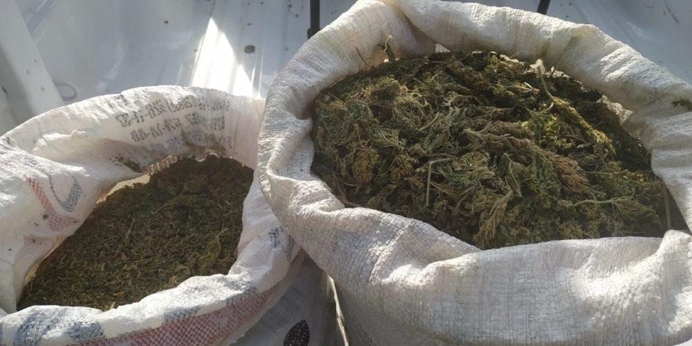 Fueron asegurados 12 kilos de marihuana en Calvillo