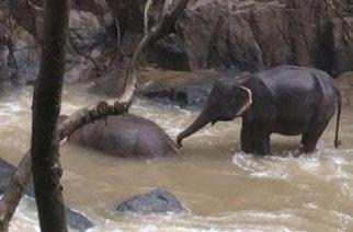 Elefantes siguen muriendo tras caer en una cascada de Tailandia, ya van 11