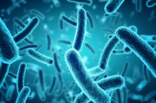 Desarrollan bacterias que comen CO2, ayudarían en contra de cambio climático