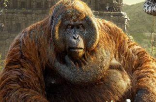 Gigantopithecus era pariente lejano del orangután: estudio