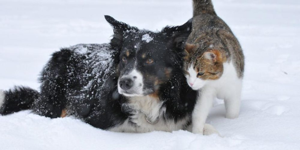 Perrita callejera salva a pequeños gatitos de morir congelados