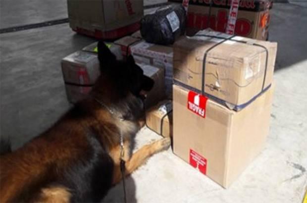 Detienen miles de dólares falsos provenientes de Aguascalientes