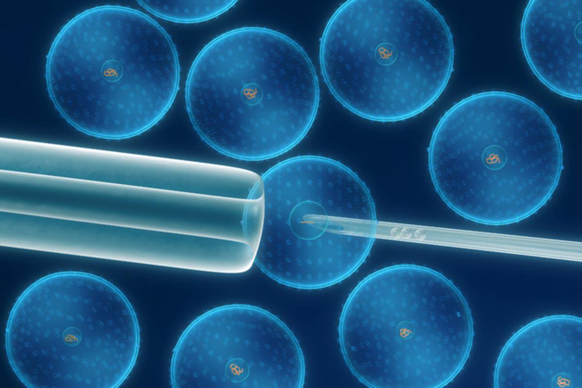 Tratan disfunción eréctil con células madre