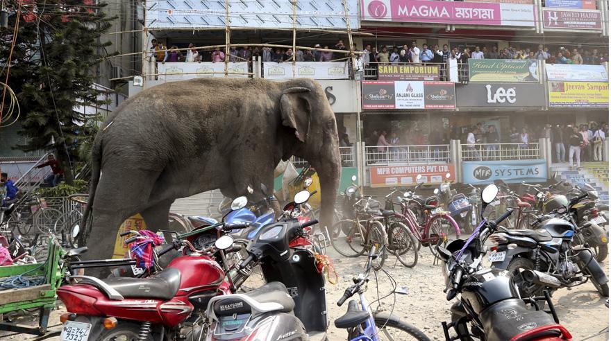 Elefante salvaje irrumpe en un pueblo y destroza todo a su paso VIDEO