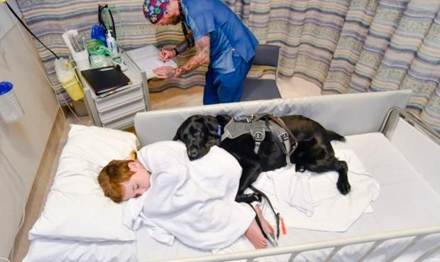 """Conmueve en redes la historia de """"Mahe"""", el perro que nunca se aparta de su dueño autista"""