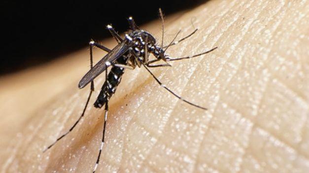 ISSEA emite medidas preventivas para evitar en vacaciones dengue o zika