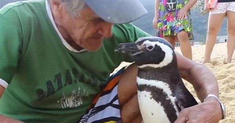 (VIDEO) Pingüino viajó más de 8 mil km. para ver al hombre que le salvó la vida