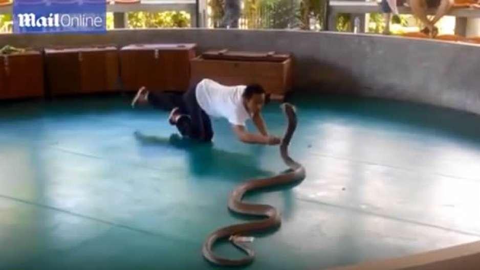 Una cobra escapa de su domador en un espectáculo con turistas. VIDEO