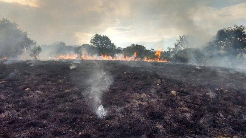 Dos incendios en áreas naturales protegidas de Ags. en lo que va del año