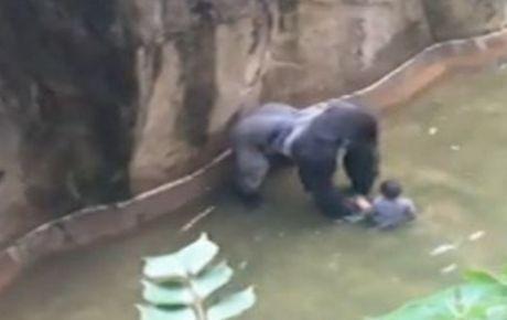 Sacrifican a gorila de Zoológico de EU para proteger a menor