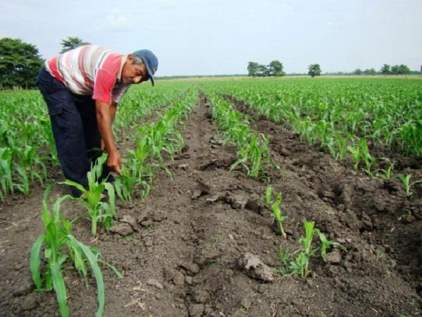 El campo no es prioridad para el gobierno estatal, por eso recortó 70 mdp: D. Nájera