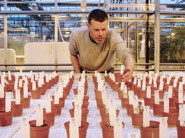 Cultivan con éxito alimentos en suelo similar al de Marte