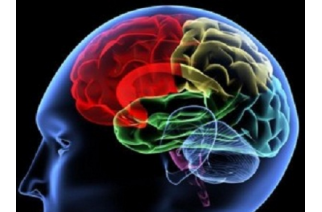 Existen 8 tipos de inteligencias ¿Cuál es la tuya?