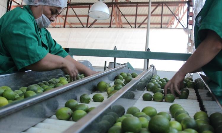 Precios al productor registraron en agosto su mayor incremento del año