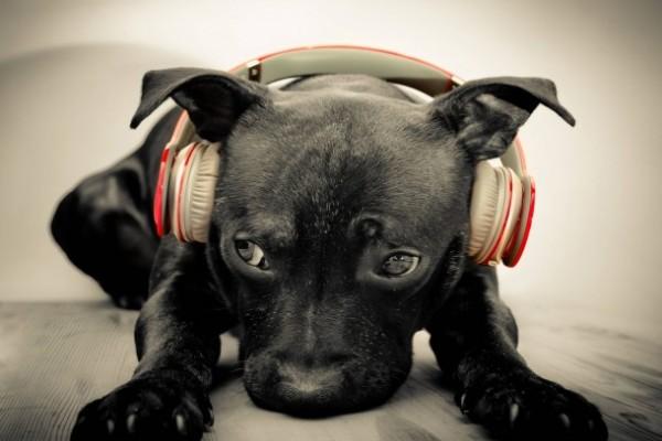 ¿Qué tipo de música les gusta a los perros?