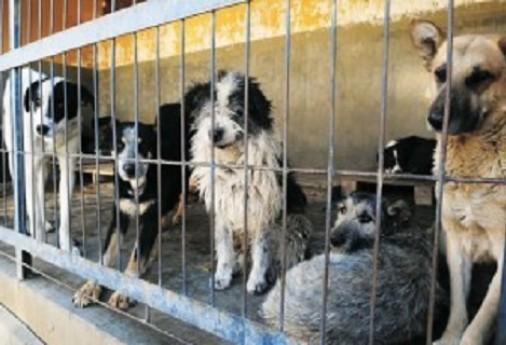 Cuestionan sacrificios inmediatos de animales en centro antirrábico en Ags
