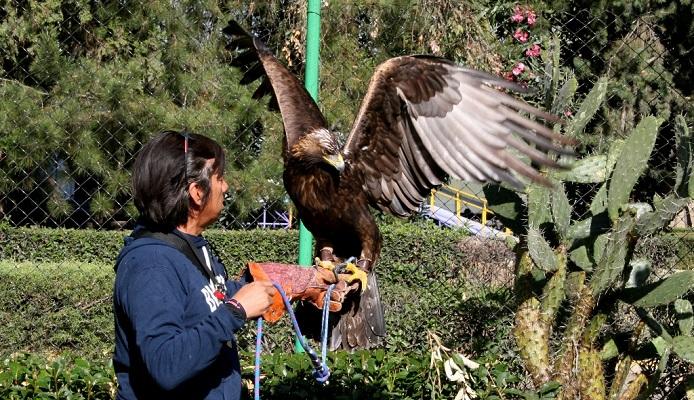 Aguascalientes destaca a nivel nacional en la rehabilitación del águila real