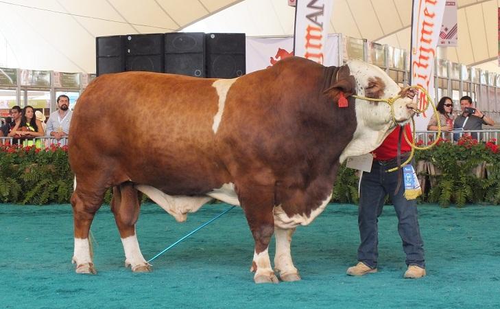 Habrá ganado bovino de calidad durante la Expo Ganadera de la FNSM 2017