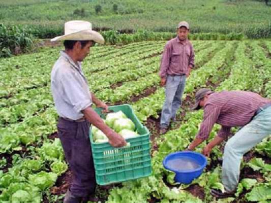 Gobierno federal debería buscar nuevos mercados para productos agrícolas