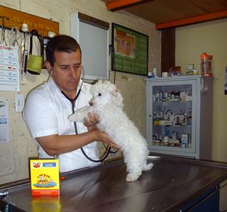 Buscan cerrar espacios a veterinarios patito en Aguascalientes