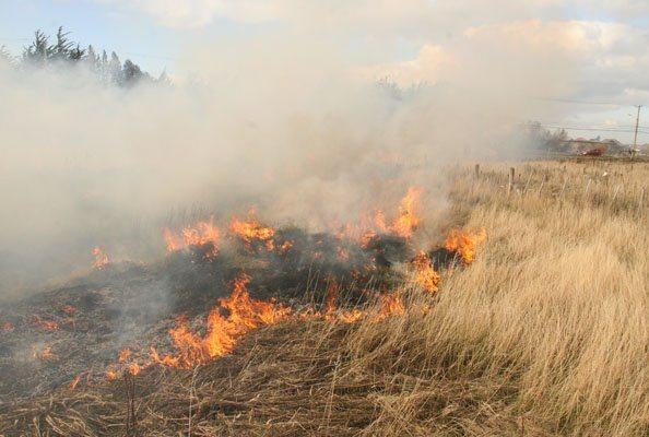 Ya suman 29 incendios en Aguascalientes durante 2017