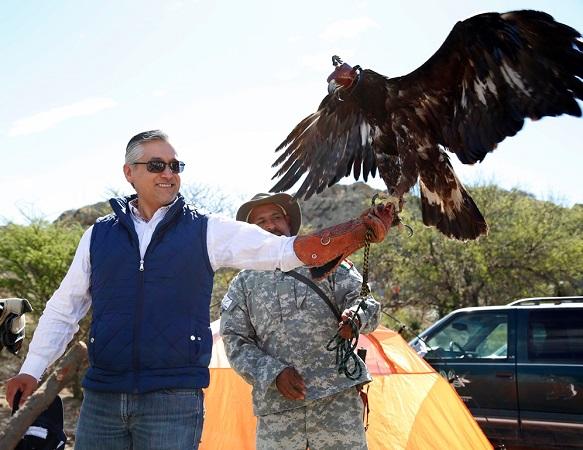 Liberan en su hábitat a ejemplar de águila real rehabilitada en Ags.