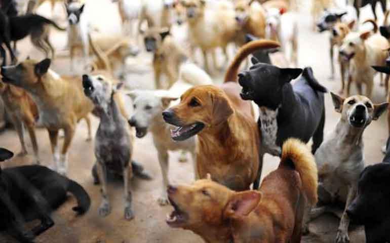 500 animales al mes se detectan sin dueño en las calles: Héctor Anaya