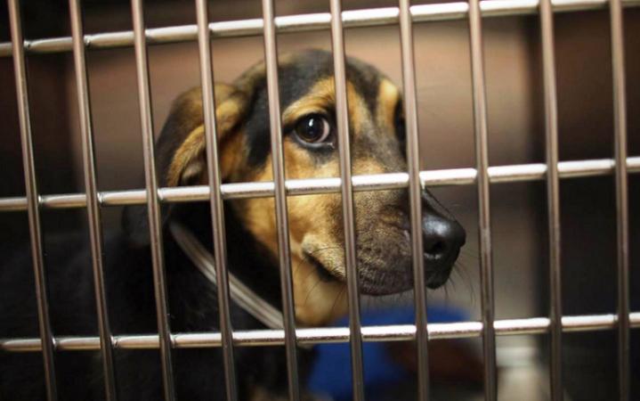 Busca gobierno estatal evitar maltrato animal durante la FNSM