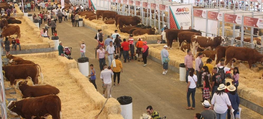 Más de 4 mil 150 ejemplares de ganado participan en Expo Ganadera de Ags.