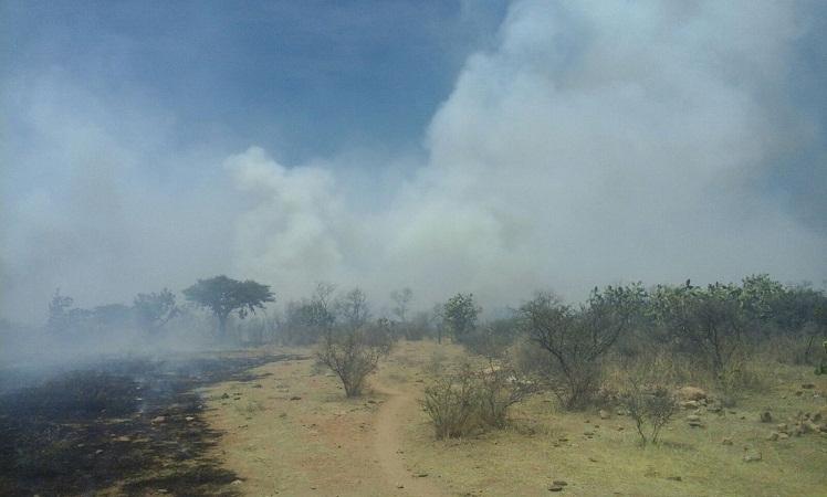 Suma 1 mil 200 hectáreas consumidas incendio del Cerro de los Gallos