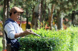 Dan mantenimiento permanente al Parque Rodolfo Landeros Gallegos en Ags.
