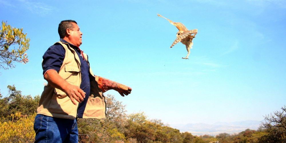 CRAR ha reincorporado a su hábitat a 61 animales en el año