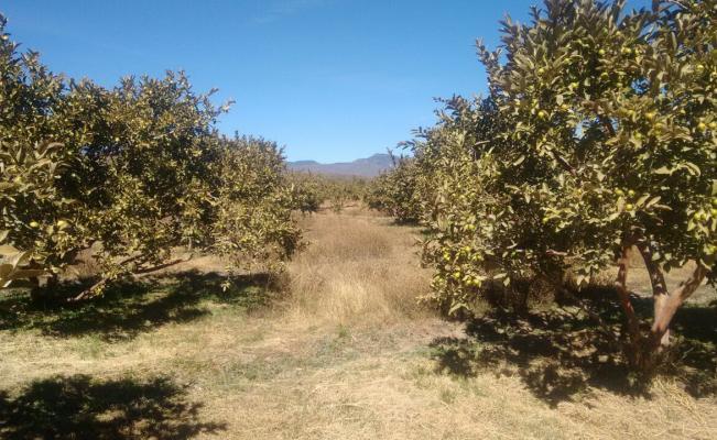 Apoyarán a agricultores afectados en Aguascalientes tras heladas