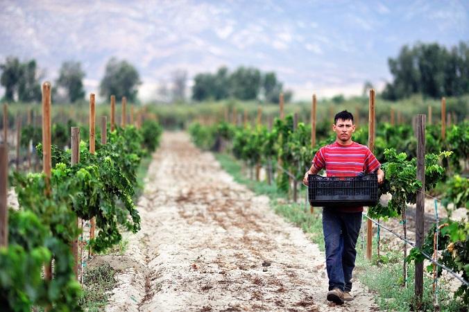 Otorgan capacitación a productores de industria vitivinícola de Ags.