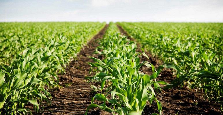 Sedrae anuncia 35 millones en reconversión de cultivos