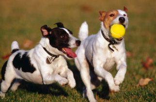 Las razas de perro que casi no sueltan pelo
