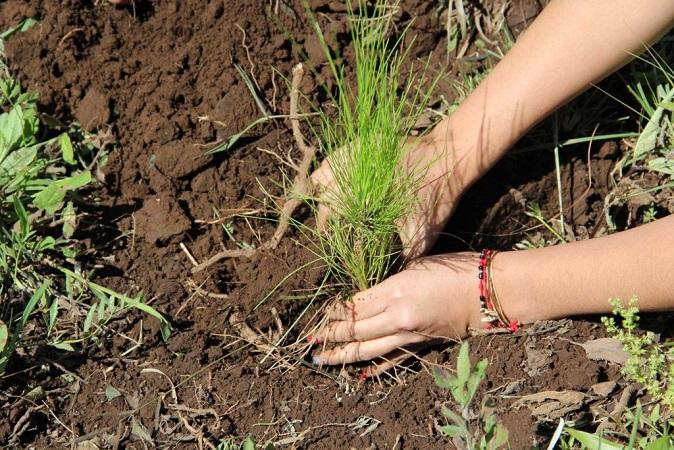 Adelanta Semadesu reforestación permanente