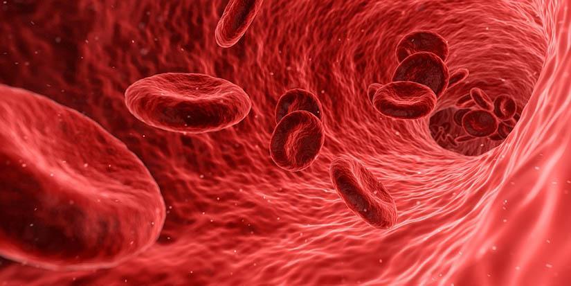 Sangre dorada: el tipo de sangre más raro del mundo