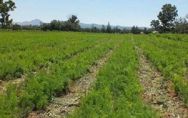 159 agroproductores se suman a cultivos tecnificados en Aguascalientes