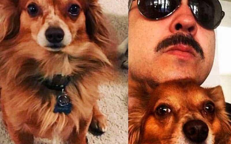 Aerolínea pierde mascota de Pepe Aguilar; lo entregan sin vida