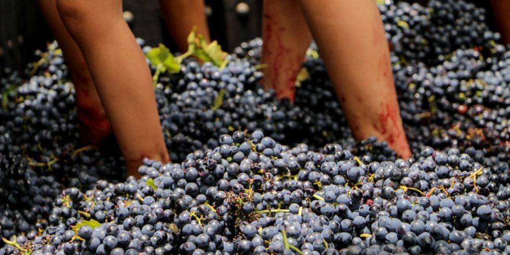 Se llevará a cabo la Feria de la Uva y Queso Artesanal