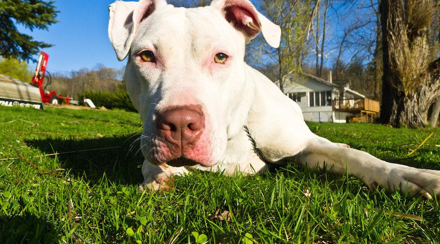 Científicos señalan las razas de perros que más tienden a morder