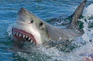 Enorme tiburón embiste un bote y muerde el motor