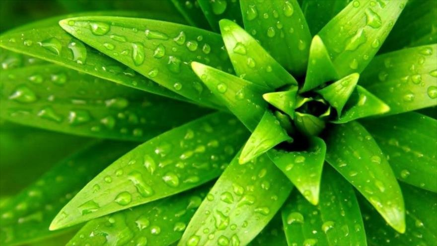 9 plantas que eliminan las energías negativas de tu casa