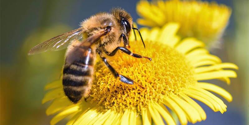 Esto es lo que le pasaría a la Tierra si las abejas se extinguen