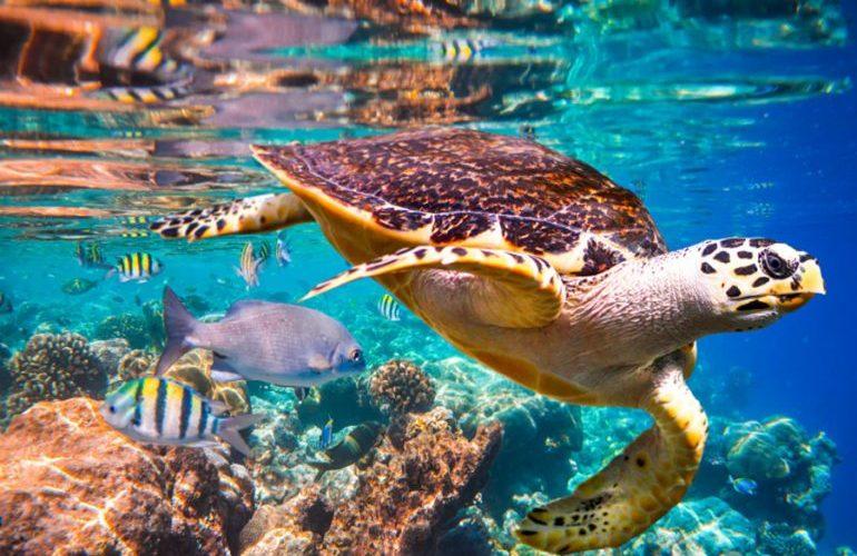 Un millón de especies están en peligro de extinción, señala informe