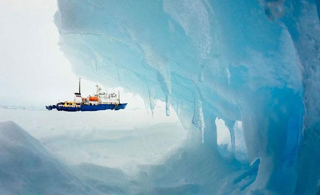 Encuentran roca cubierta de animales desconocidos en la Antártida
