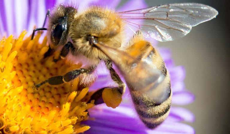 Entrenan científicos abejas para jugar con balones de futbol