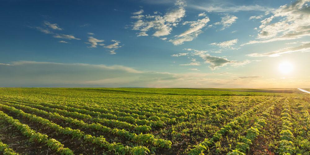 La dieta será clave en la lucha contra el cambio climático